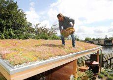 voordelen van een groen dak