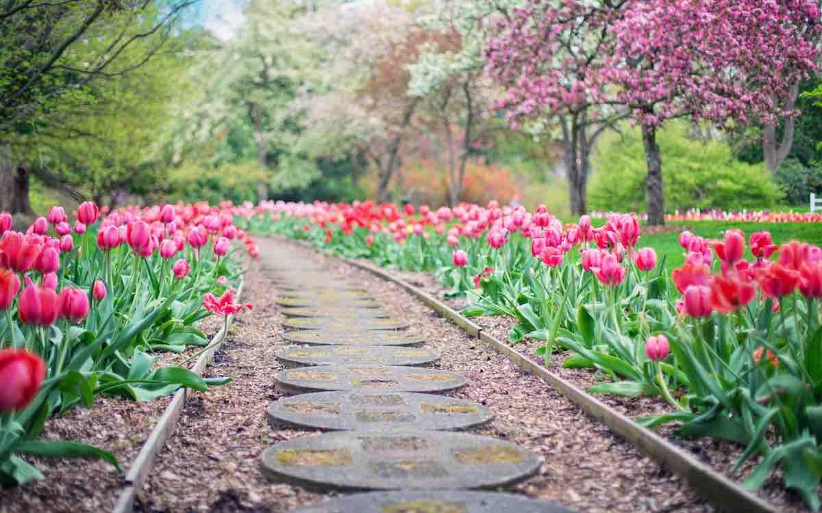 wanneer bloembollen planten tuin