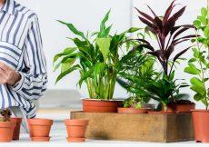 makkelijke onverwoestbare kamerplanten